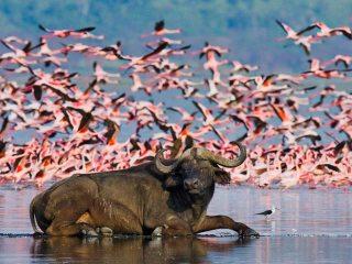 Lake-Nakuru-NP_F