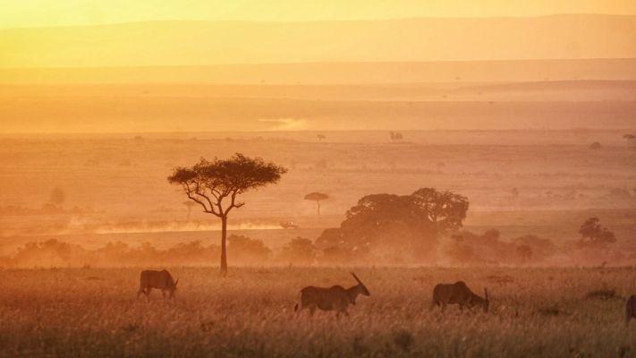 Maasai Mara Morning]