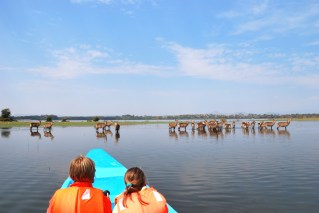 Tourists in a boat on the Naivasha Lake and antelopes