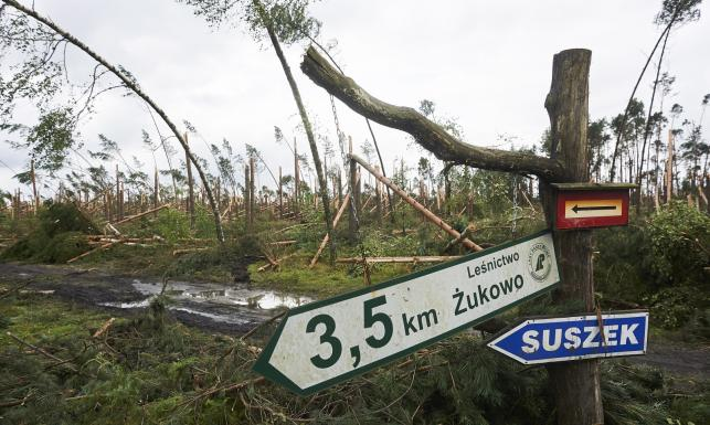 Las w Suszku niemal przestał istnieć. Oto, co zostało z miejsca, w którym obóz rozbili harcerze