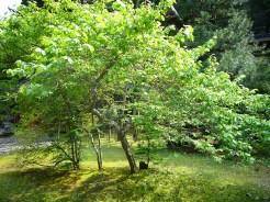 Lovely-Tree