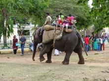 Elephant rides inside Mysore Palace