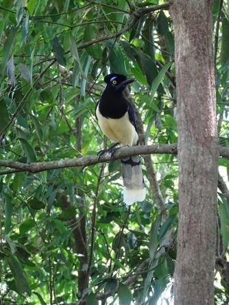 Toucans weren't the only impressive birds in the park