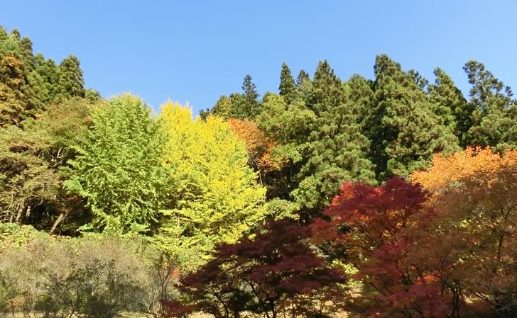 福島・強滝