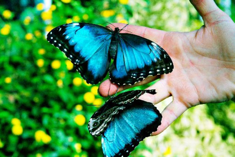 Where else can you get this close to butterflies? Discover new species and colors in the midst of this urban jungle. Photo: Cruise Victoria