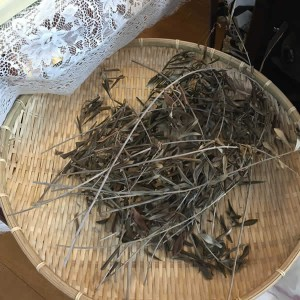 前年の枝を回収