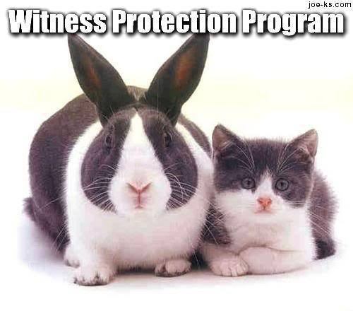 witness-protection-program2