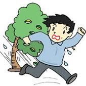 強風などでの倒木による人への被害