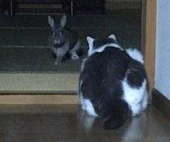 池袋JK制服キャバクラ【はちみつくろーばー】うづき ハムスター