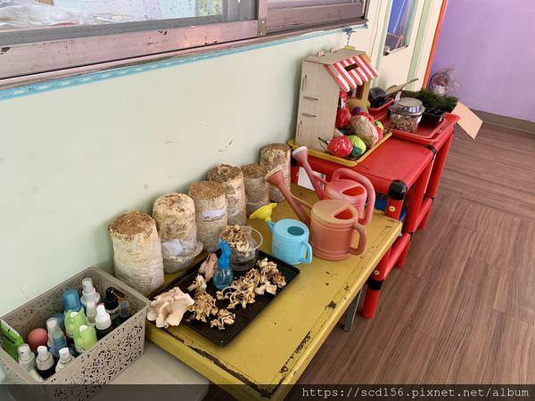 北大幼兒園菇菇農場