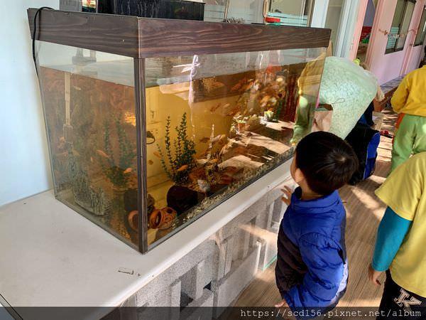 北大幼兒園魚缸生態池