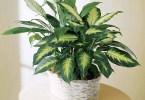 Растения-пылесосы
