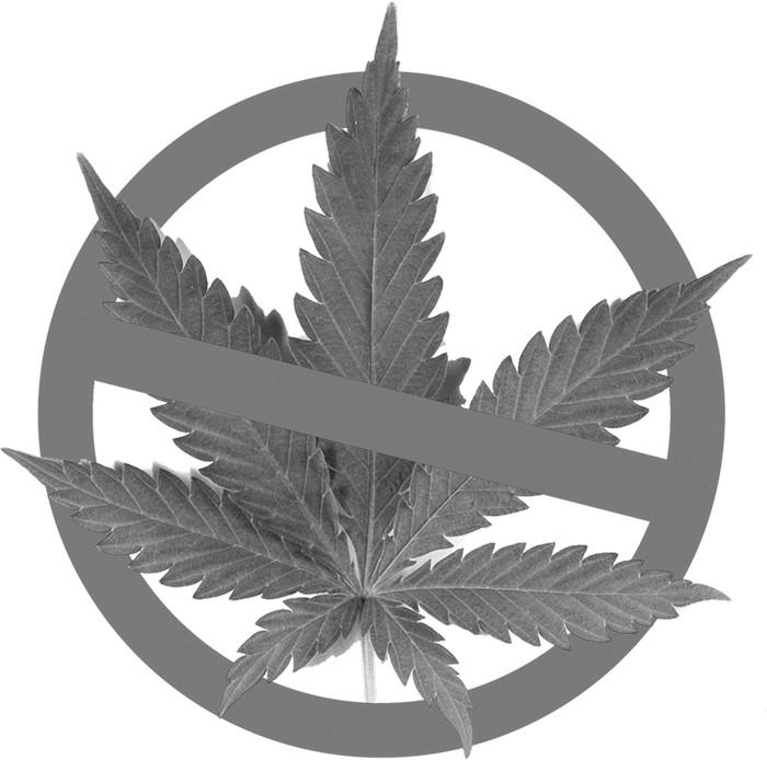 Марихуана это зло уголовная статья за употребление марихуаны