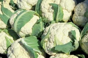 Белокочанная и цветная капуста, брокколи