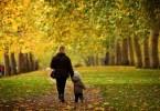 Деревья полезны для здоровья человека