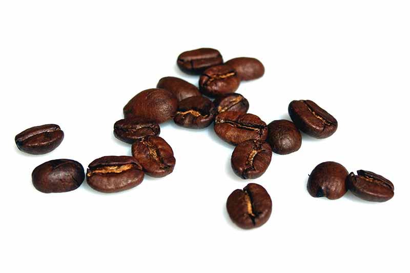 Онищенко призывает оградить школьников от напитков с кофеином