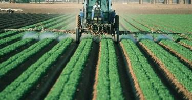 Пестициды: как себя обезопасить