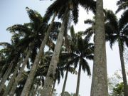 LINED WITH PALMS