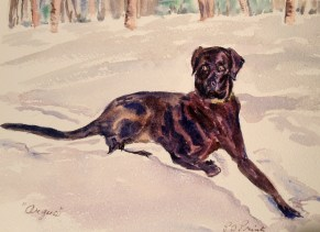 Peggy's watercolor of Argus at the Burn Hut. What an artist!