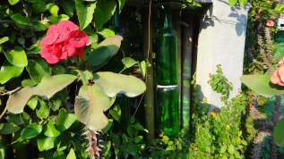 Bottle Fence and Flower - Chiang Mai Thailand