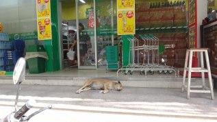 Pork Dog Outside the Tesco