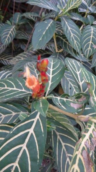 Green Leaves and Orange Flower