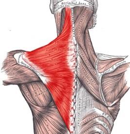 Bodybuilding-Techniques-Exercise-Neck-Muscles-02