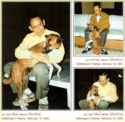 King of Thailand - Stray Dogs - Doi Dogs