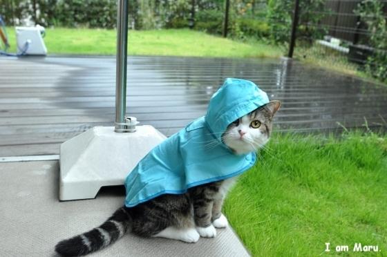 Rainy-Day-Essentials_p8