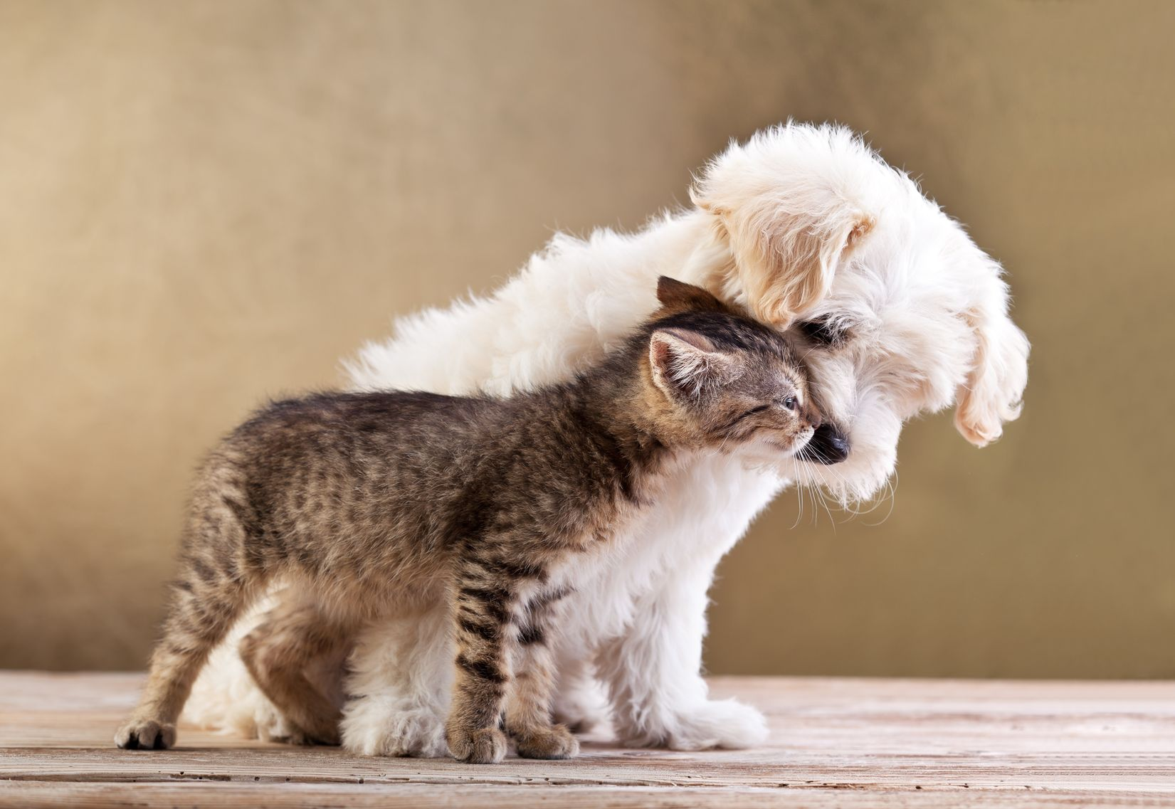 1 Protect Pets Against Heat