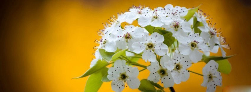 flowers-cherry-blossoms-17-
