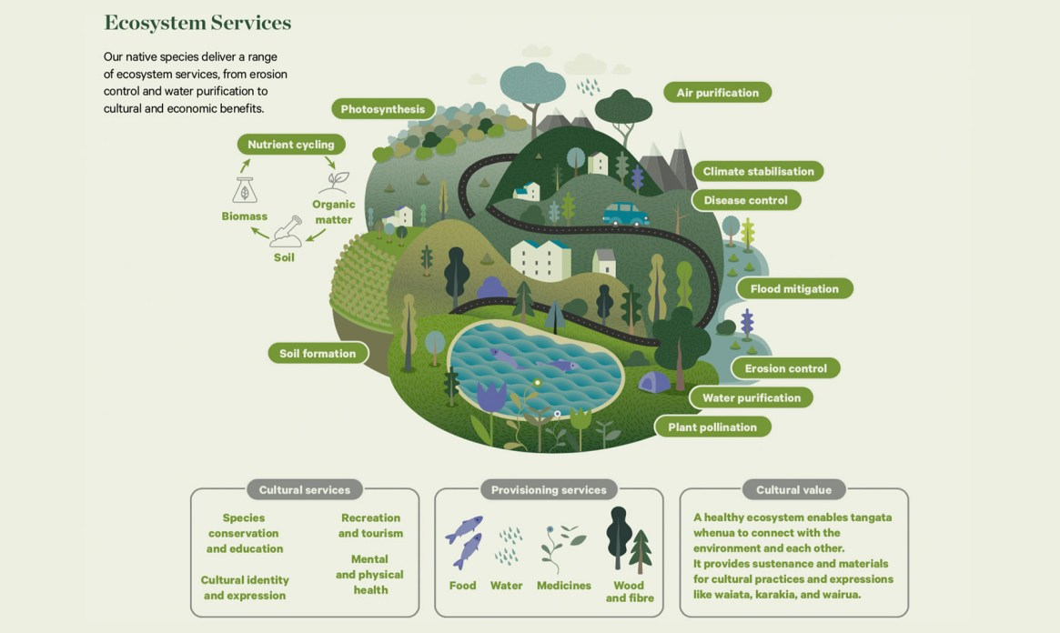 Fig. 2: Ecosystem Services (Image: The Aotearoa Circle)