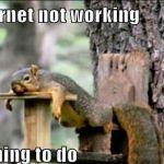Random  Bored Squirrel