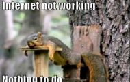 Bored squirrel, funny memes, #NetworkingDurham #905business.com