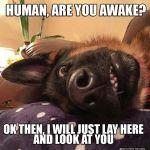 Weekend Morning Dog