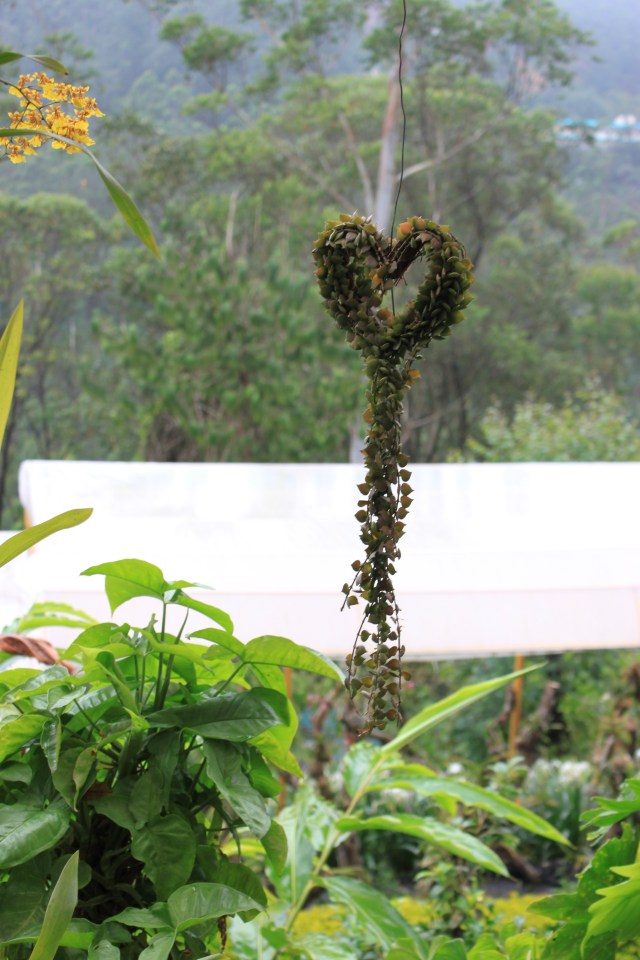 A heart shaped container for the vine to spread.. it was hanging so you don't see people in the picture :)