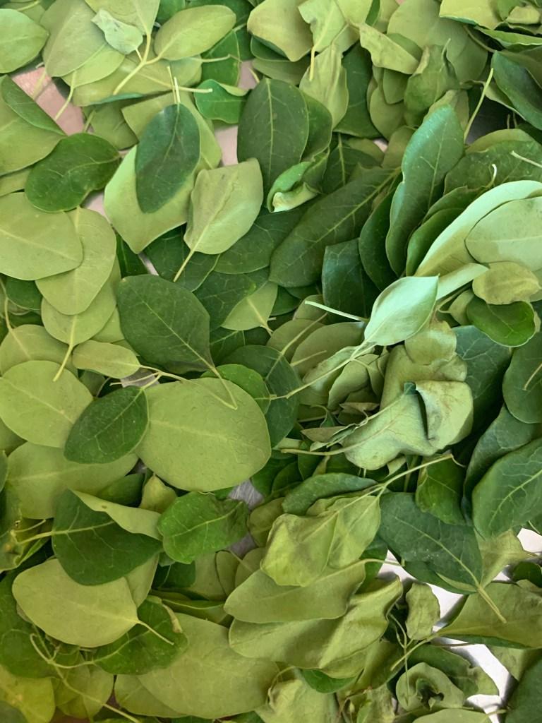 Mooring leaves - Green