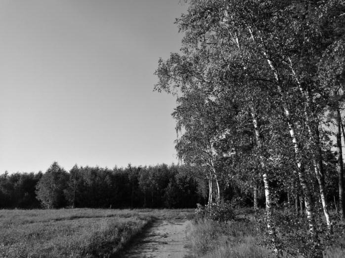 Huawei P9 - Zdjęcie w trybie monochromatycznym - recenzja 90sekund.pl