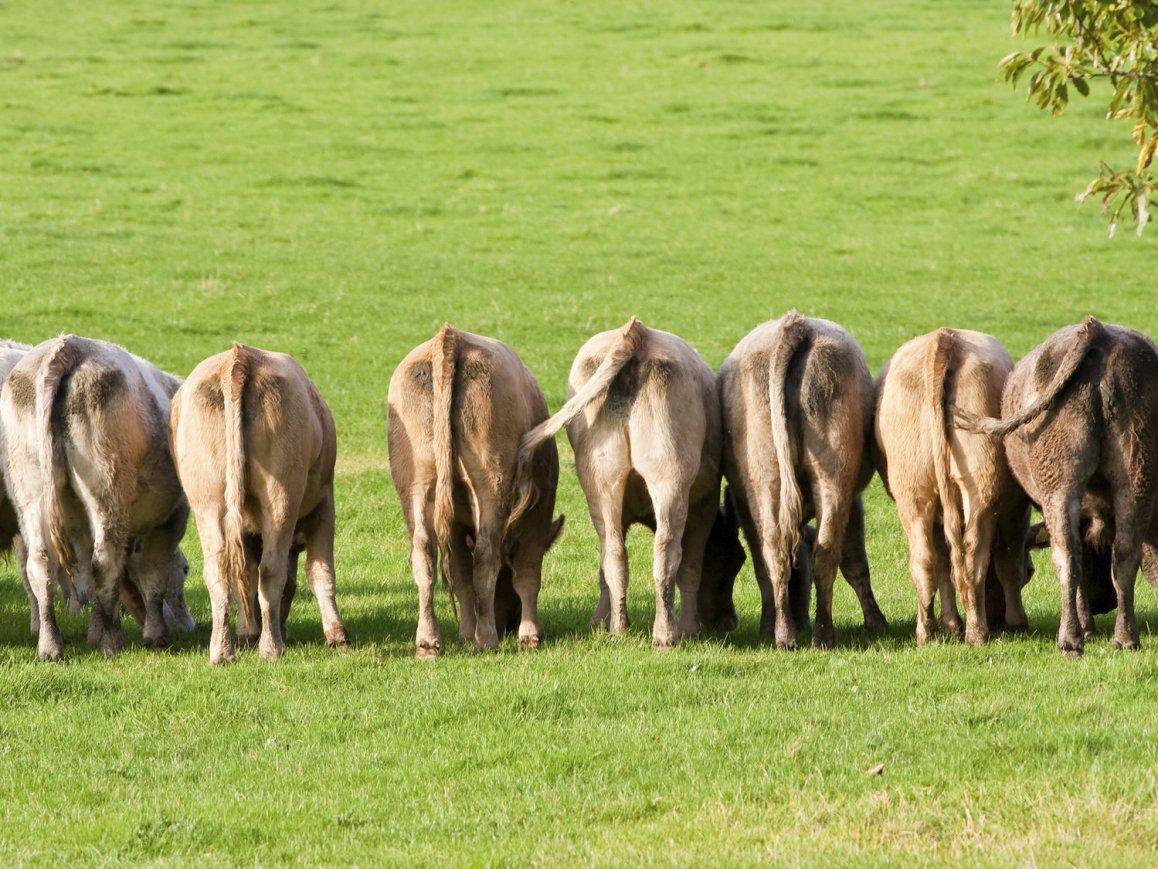 seven cows joseph pharaoh rear healthy lean dreams genesis