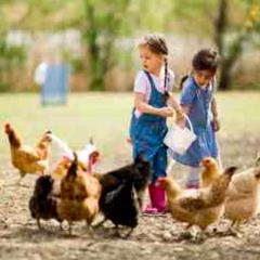 94 imagen niñas con gallinas