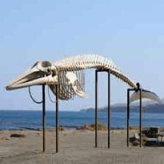 esqueleto ballena 94
