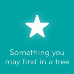 Something you may find in a tree 94