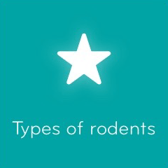 Types of rodents 94