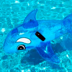 94 pool dolphin picture