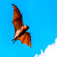 94 bat picture