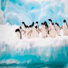 94 penguins picture