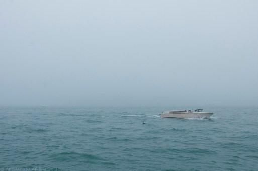 Italy, Venice, San Giorgio Maggiore covered by fog