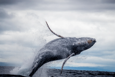 Whale watching at Monterey Bay