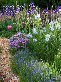 Inspiring Planting Combination Ideas For Your Garden 21