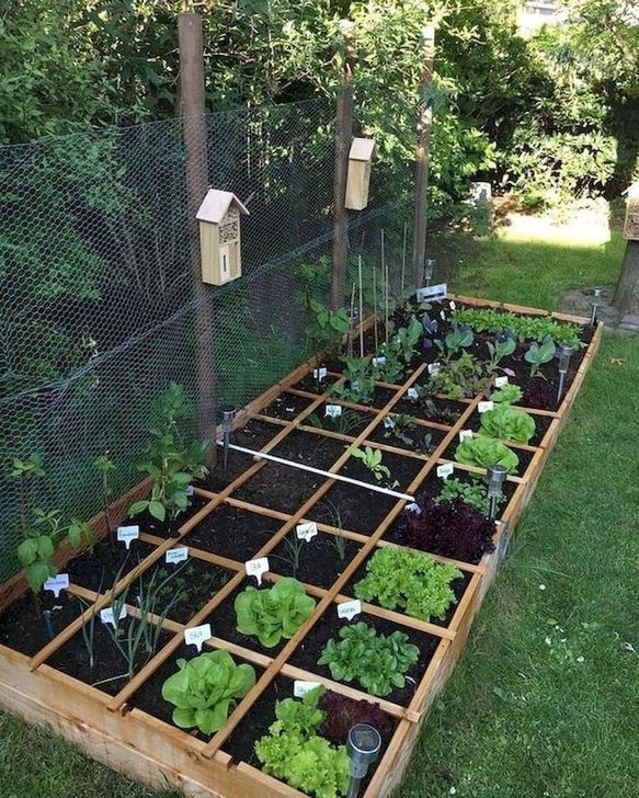 Unusual Vegetable Garden Ideas For Home Backyard 32